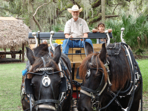 Horse-Drawn Tram Tours