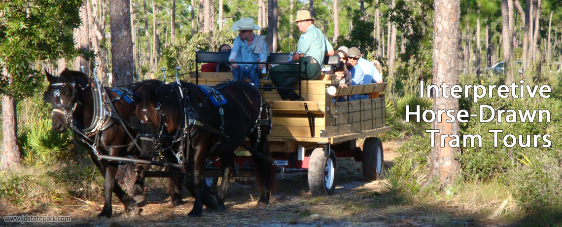 Interpretive Horse-Drawn Tram Tours