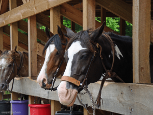 Our Happy Horses
